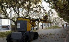 El servicio de Parques y Jardines se mudará a Medio Ambiente
