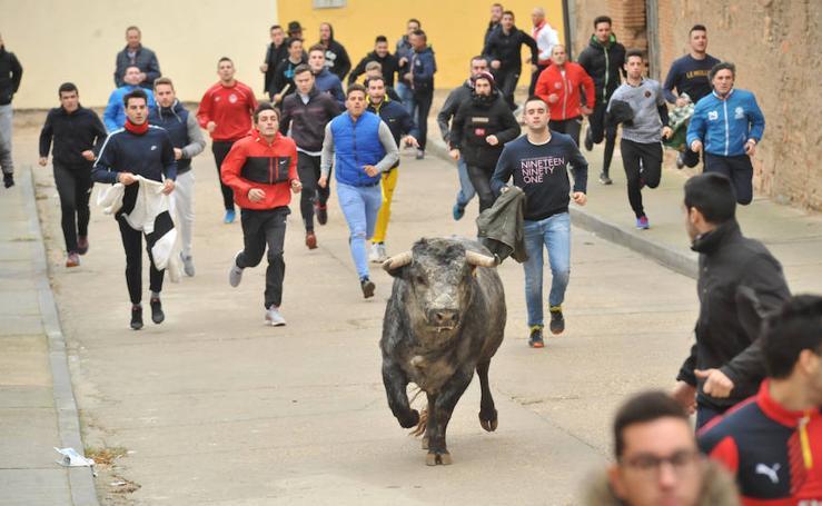 Pollos acoge el último encierro de la temporada en la provincia de Valladolid