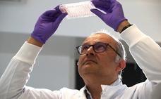 El alcohol puede dañar el ADN de células madre