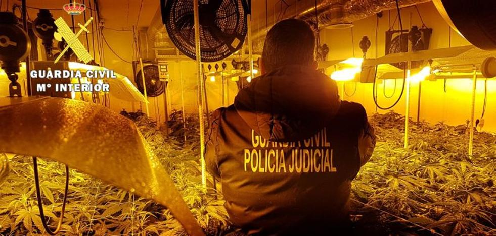 La Guardia Civil desmantela una importante plantación indoor de marihuana en Burgos