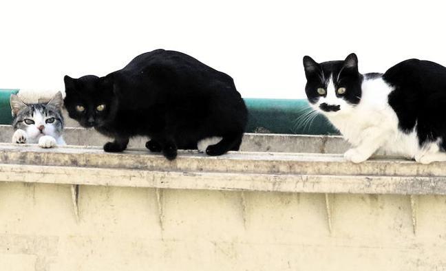 Los 2.500 gatos callejeros de Segovia ya tienen 25 cuidadores oficiales