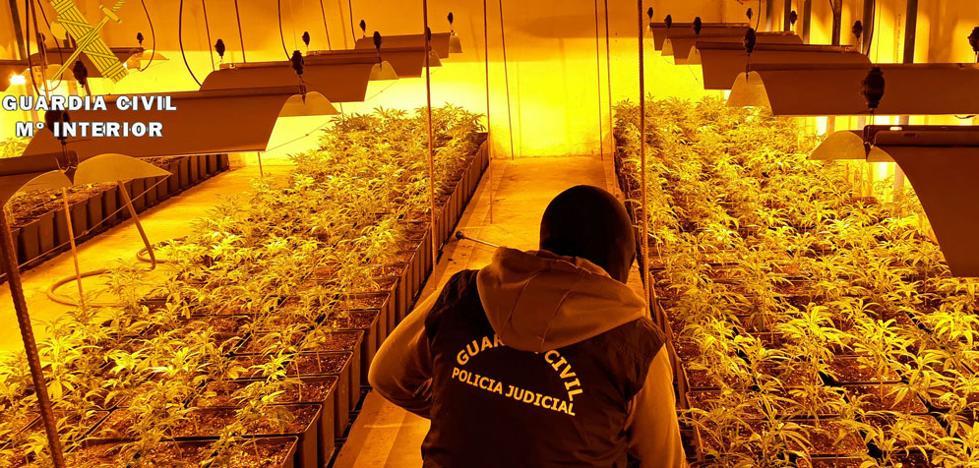Desarticulan un grupo dedicado al cultivo de marihuana, que vendía la droga en Burgos