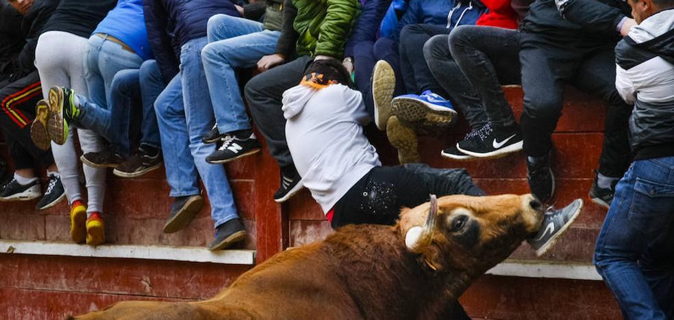 Herido de gravedad un joven de 20 años en la capea de Ciudad Rodrigo