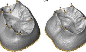 El primer estudio morfométrico en 3D de los molares de la Sima de los Huesos tiene sello burgalés