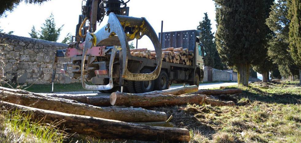 Tragsa sanea el entorno de La Cartuja con la tala de medio centenar de pinos