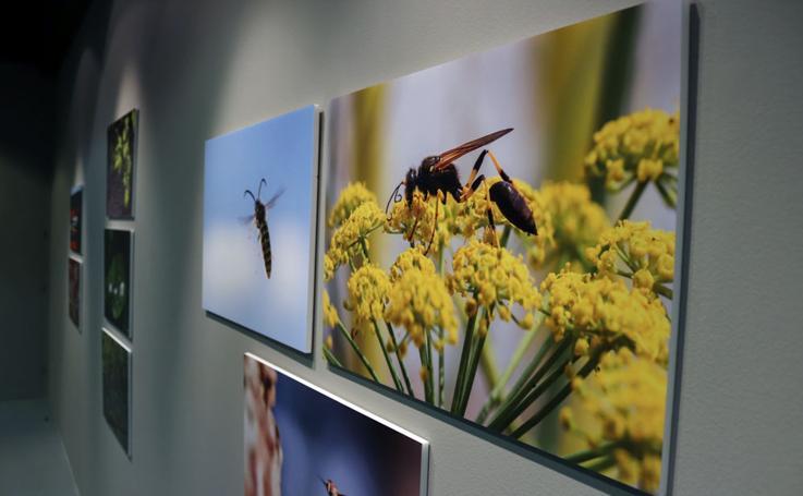 Exposición 'Naturaleza urbana', de Fran Álvarez