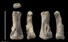 El CENIEH participa en el hallazgo de uno de los fósiles humanos modernos más antiguos de Asia