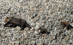 Los furtivos controlan el Parque Natural de Fuentes Carrionas, según los animalistas