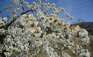 Jornada formativa sobre frutales con los cerezos de Las Caderechas en flor