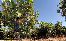 Ribera del Duero y Rueda aúnan fuerzas en la promoción de sus vinos en China