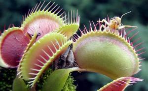 La clonación de plantas, un contraataque a la extinción de las especies