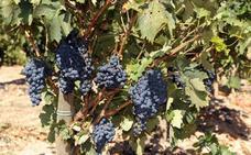 Ribera del Duero, la ruta del vino más rentable de las 27 certificadas en España