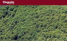 Cinco bosques con capacidades curativas en Castilla y León