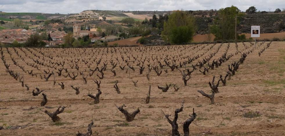 Ribera espera con incertidumbre la bajada de temperaturas con riesgo de alcanzar cotas negativas