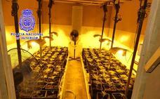 Desmantelan una «gran plantación» de marihuana en una nave de La Mora