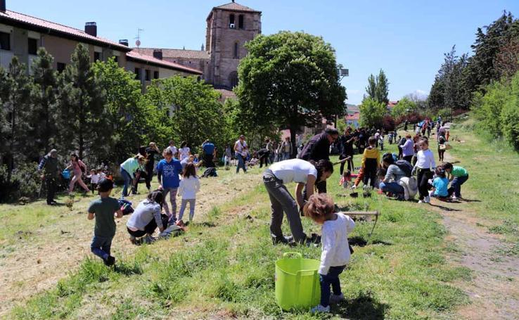 Jornada de plantación de árboles en la ladera del Castillo