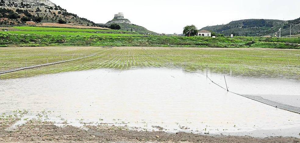 El campo recibe con satisfacción las lluvias sobre todo en el secano y en los pastos