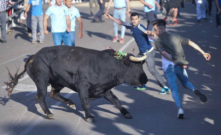 En Medina del Campo disfrutan del Toro de la Feria
