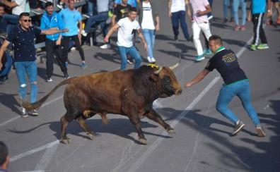 Alrededor de 15.000 personas disfrutan del Toro de la Feria en Medina del Campo