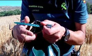 El Seprona investiga a 6 agricultores por fraude en el grano de cereal protegido