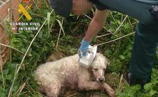 El Seprona auxilia a un perro abandonado que sufrió un atropello