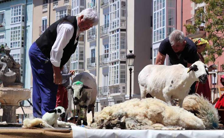 En imágenes el XXXI Festival del Esquileo