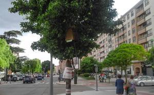 Proliferan los enjambres en Burgos por el calor y la alta floración