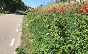 La Diputación descarta utilizar herbicidas para limpiar las cunetas de las carreteras provinciales