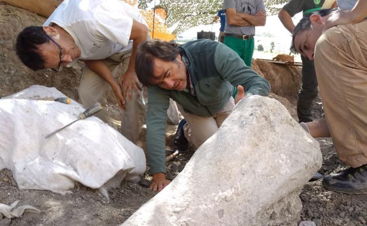 El Colectivo Arqueológico Salense descubre importantes restos de un saurópodo