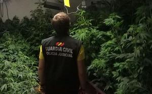 Localizan 132 plantas de marihuana en un chalet adosado