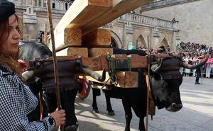 La Cabaña Real de Carreteros dedicará a la Catedral de Burgos sus rutas anuales hasta 2021
