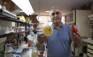 La piel de frutas y verduras, convertida en envases