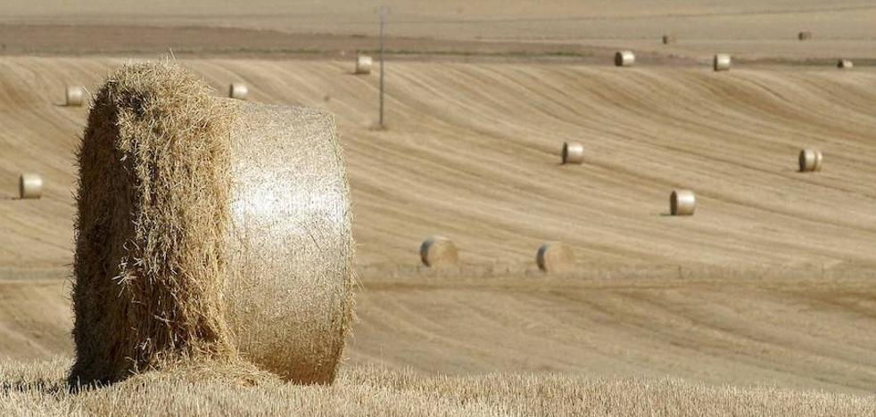 La Alianza UPA-COAG denuncia robos de bolas de alfalfa en Las Merindades