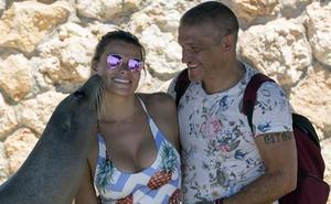 Amor entre focas y delfines