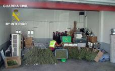 Desmantelan un laboratorio de marihuana, descubierto por casualidad mientras buscaban alfalfa robada
