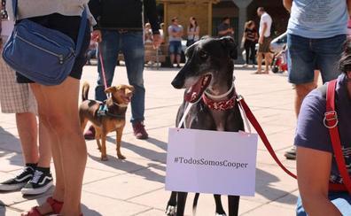 Más de un centenar de personas se concentran en Santovenia por la muerte de un perro