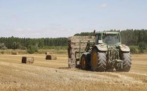 Burgos cierra la cosecha del cereal con 1,6 millones de toneladas y precios irregulares