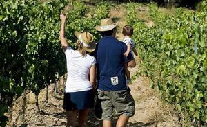 La Ruta del Vino Ribera del Duero, la más deseada de las rutas enoturísticas españolas