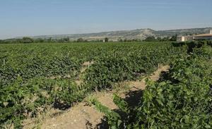 La Adri Ribera del Duero burgalesa destina 3,4 millones para invertir en nuevos proyectos