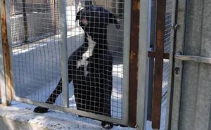 El PSOE propone crear un contrato específico para la recogida de animales y la perrera