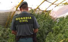 Investigada una mujer tras hallar marihuana en una parcela anexa a su casa