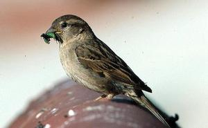 La Fundación Caja de Burgos organiza un taller de observación de aves de otoño