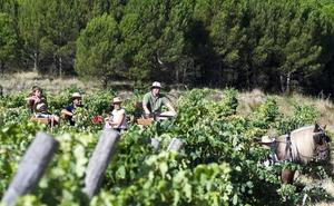La Ruta del Vino Ribera del Duero sugiere 30 actividades de vendimia en otoño