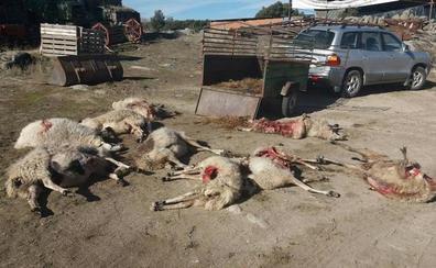 La Junta estudia que los ganaderos puedan disparar al lobo para impedir los ataques