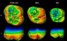 Dos estudios de dientes fósiles apuntan a unas profundas raíces neandertales en Europa