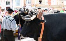 Diputación estudiará habilitar una línea de ayudas para proteger la vaca serrana y se compromete con el Ecomuseo de Quintanar