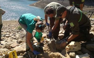 Hallan el esqueleto de un oso pardo en el embalse de Requejada, en Palencia