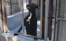 La gestión de la perrera se desligará de limpieza y basuras y se apostará por un contrato social