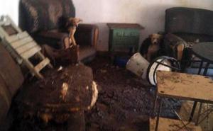 Rescatan a 16 perros en condiciones penosas tras el desahucio de una casa en Roda de Eresma