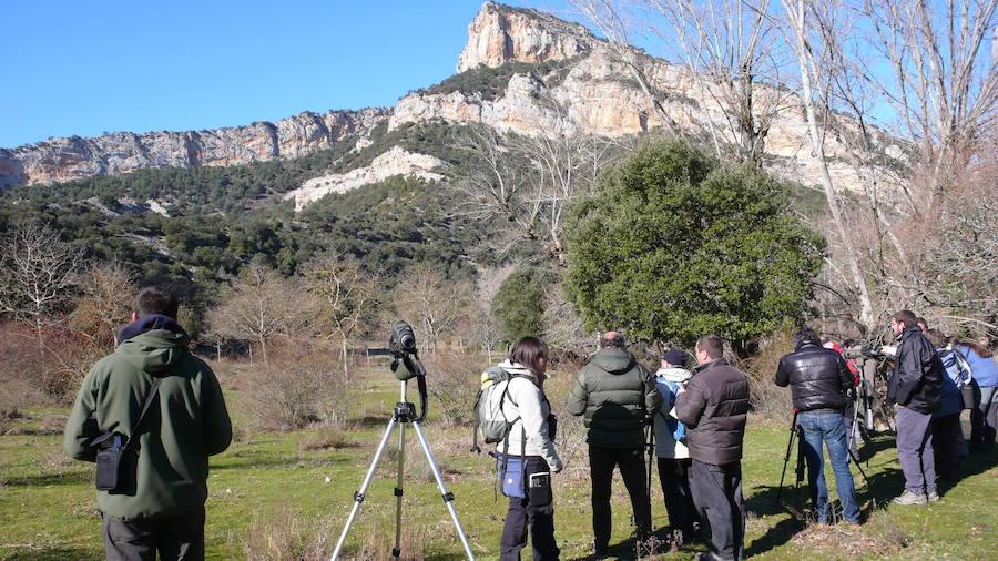 Un fin de semana para disfrutar de las aves y los bosques autóctonos del Valle de Mena